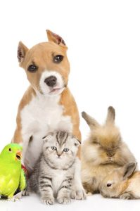 pet sitting services - group of pets